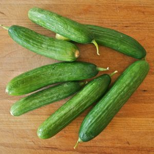 Cool Cucumbers: 6 Varieties and How to Use Them: Kirby Cucumbers