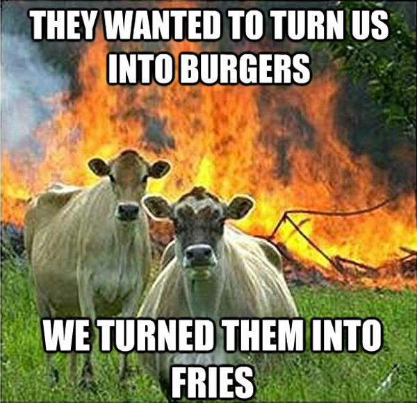 """<b>Evil Cows is the new best cow meme.</b> These badasses are the <a href=""""http://www.buzzfeed.com/scott/disaster-girl"""">Disaster Girl</a> of the bovine world."""