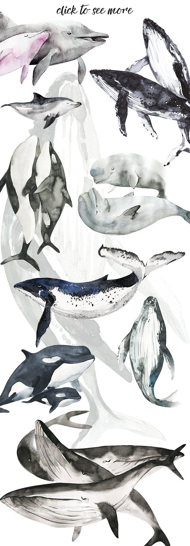 best 25 whale drawing ideas on pinterest whale illustration