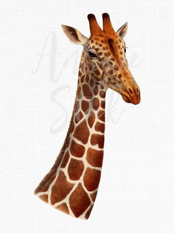 Antique Image Giraffe Head Png Clipart African Etsy Antique Images Giraffe Head Giraffe