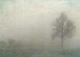 print on steel Landscape tree myst fog winter landscape photography nature flora vintage
