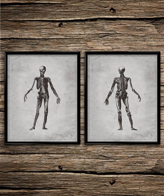 vintage skeletal anatomy vintage wall art anatomy printable home decor office decor anatomy office