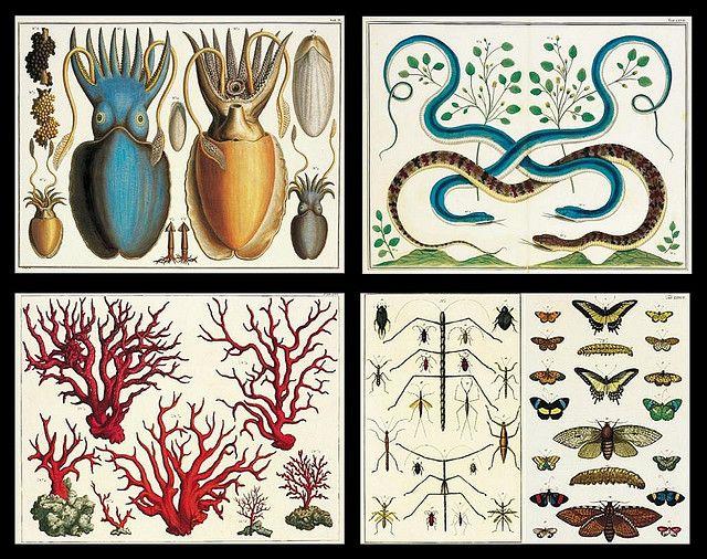 cabinet of curiosities.