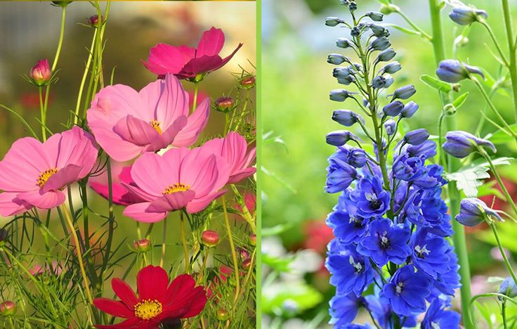 30 Flowers You Should Always Grow Side-by-Side | Rodale's OrganicLife | Beautify your garden with these companion planting combinations for any season.