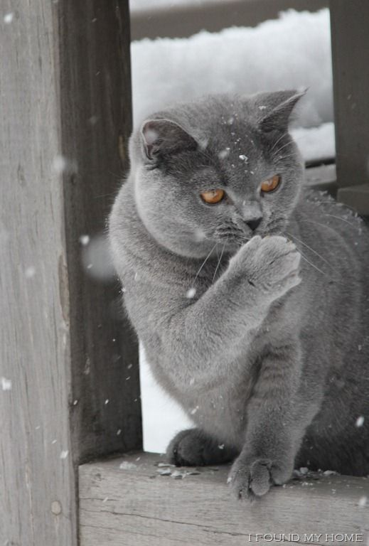 """""""In Winter, snowflakes are like kisses sent from heaven."""" --Author Unknown"""