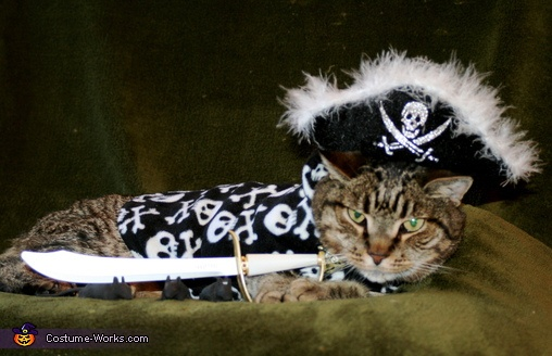 Oh ye Mices..steal my gold and walk the plank! Pet Cat Costumes