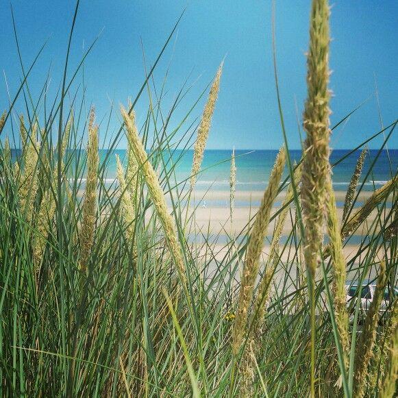 Nature - Dunes - Plage - Beach - Nord Pas de Calais - Malo les Bains