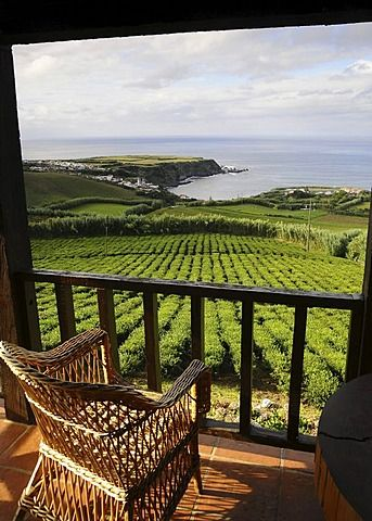 Tea plantation near Gorreana, Sao Miguel Island, Azores, Portugal Amazing view