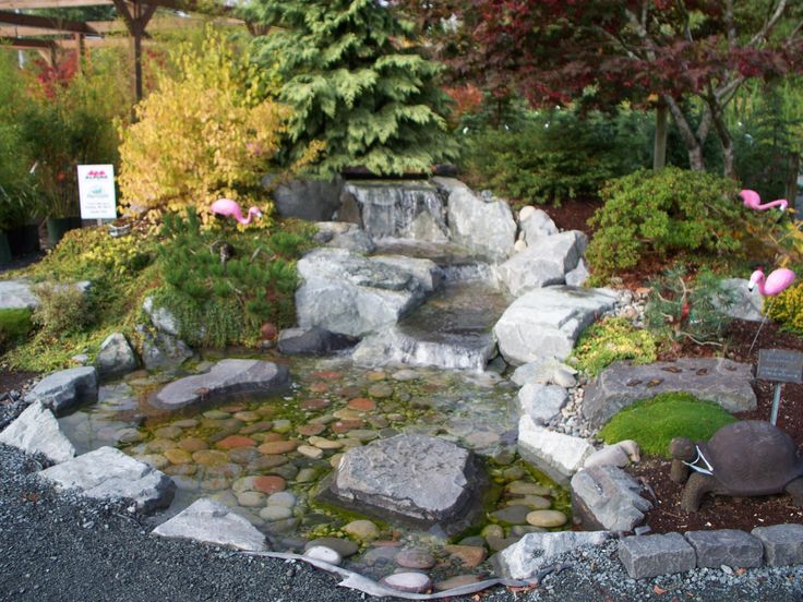 58 best images about water gardens on pinterest gardens for Garden pond life