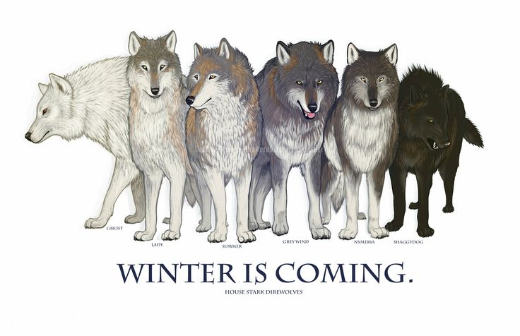 'Winter is Coming' by Daelinn Ogden