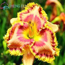 100 Mélange Hybride Noir Fleurs D'hémérocalles Graines Rare Couleur Hémérocalles Graines Nouveau Jour Lis Semences Jardin En Pot Planter La Fleur Intérieure(China (Mainland))