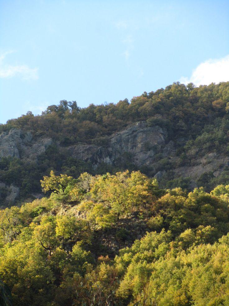 bosques de nothofagus glauca
