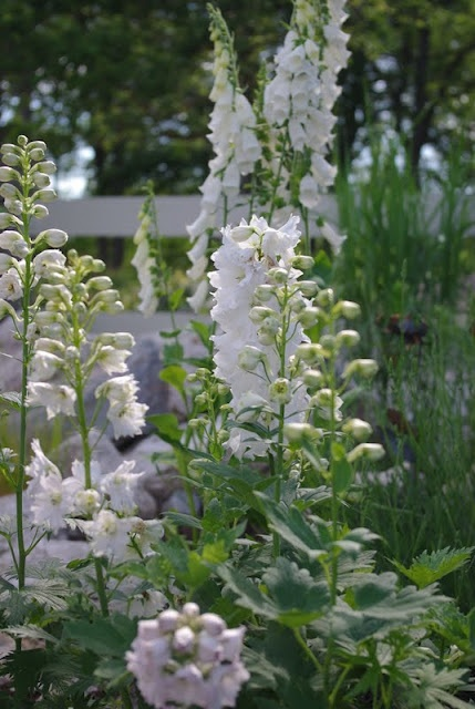 white garden White Delphinium and Fox Glove. Both are toxic to animals and Humans.