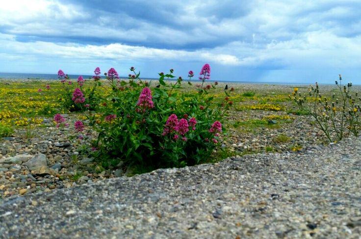 Beach flowers in Dublin