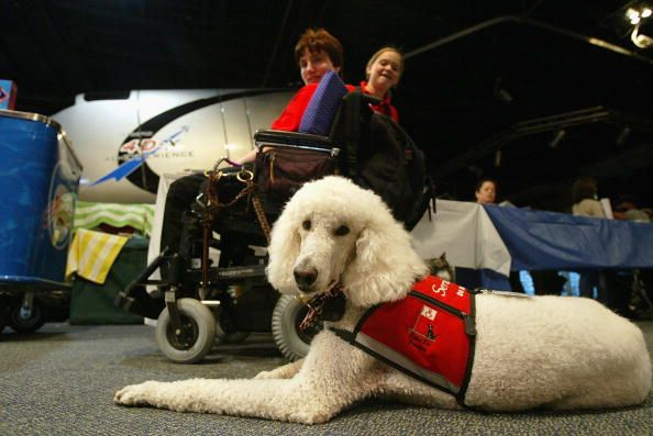 Psychiatric Service Dog Requirements
