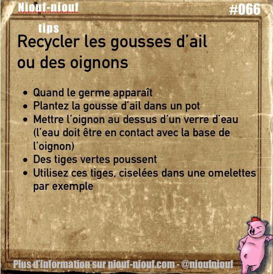 Tips Niouf-niouf : recycler les gousses d'ail ou les oignons pour obtenir des tiges vertes #cuisine #ail #oignon #trucs #astuces