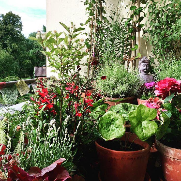:: My little hideaway,... ����☀️ :: There is enough space for plants & flowers even in the smallest place :: #gardening #balconygardening #mayapple #geranium #lavender #hostahybrid #plantainlily #thyme #clematis #chephalanthus #graybeard #jasmine #balcony #balconyview #balkongärtnern #maiapfel #waldrebe #jasmin #lavendel #funkie #schokoladenblume #chocoladeflower #jakobsleiter #jacobsladder #platzistinderkleinstenhütte http://misstagram.com/ipost/1571187648621273579/?code=BXN-teHjWHr