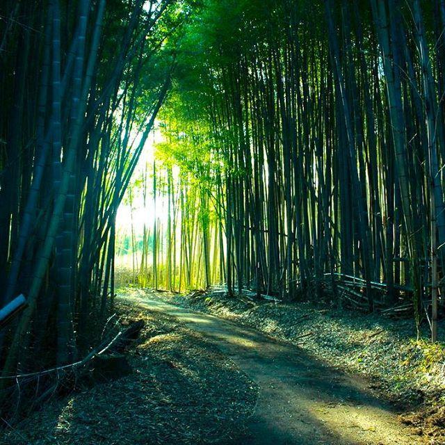 【suzupi_ctures】さんのInstagramの写真をピンしています。《*** . . 地元の竹林🎍🎍 . . 田舎だからこその 景色です💓 . . . #竹林 #竹 #🎍#林 #自然 #地元 #田舎 #田舎道 #緑 #green》