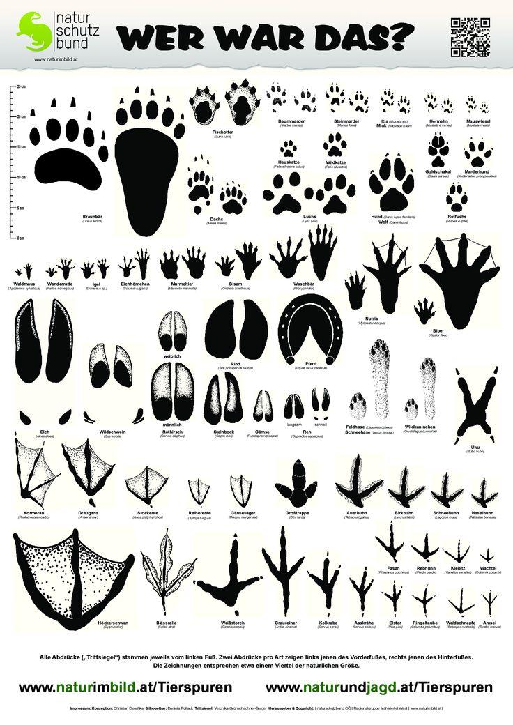 Trittsiegelbestimmungsblatt, Trittsiegel von 60 heimischen Wild- und Nutztieren  http://www.naturimbild.at/Tierspuren # http://www.muehlviertelnatur.at/data.php?id=53