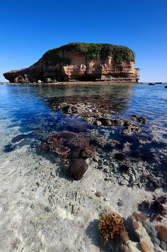 Coraly Sea, Lombok Indonesia
