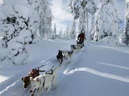 Er zijn van die ervaringen die je nooit meer vergeet. Deze vakantie in winters Zweden zit vol met onvergetelijke ervaringen! Op een sneeuwscooter door het besneeuwde Zweden racen. Of met husky's door de sneeuw. Zelf de huskyslede besturen – door de pure winterse stilte. En wat dacht je van ijsvissen? Of overnachten in een verwarmde tipi tent en een kampvuur stoken terwijl het vriest dat het kraakt! Ontdek de schoonheid van een échte winter!  via effefoetsie.nl