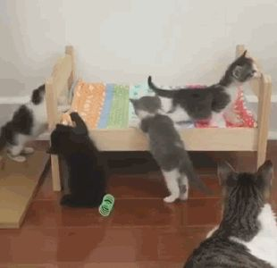 Watch how the mama cat reaches out in case the little gray one needs help!