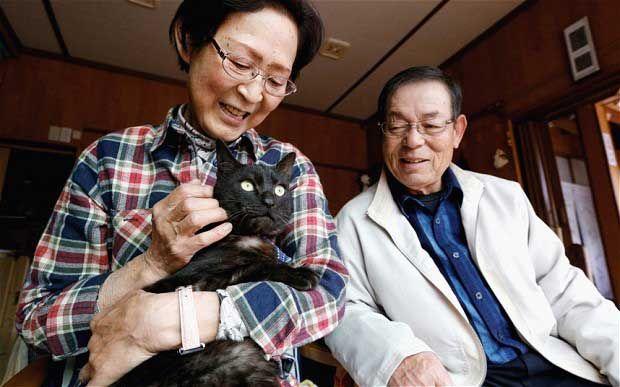 Γάτα που χάθηκε στο τσουνάμι επέστρεψε σπίτι 3 χρόνια μετά! http://bit.ly/1onTS2g