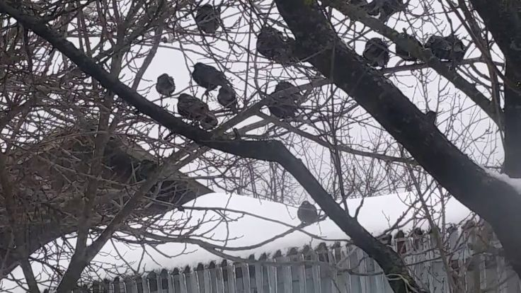 Birds eating in the winter