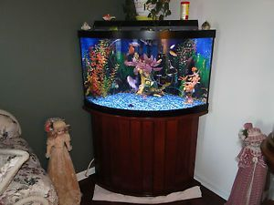 54 Gallon Corner Fish Tank | Ideas For The House | Pinterest | Fish Tank,  Fish And Aquarium Fish
