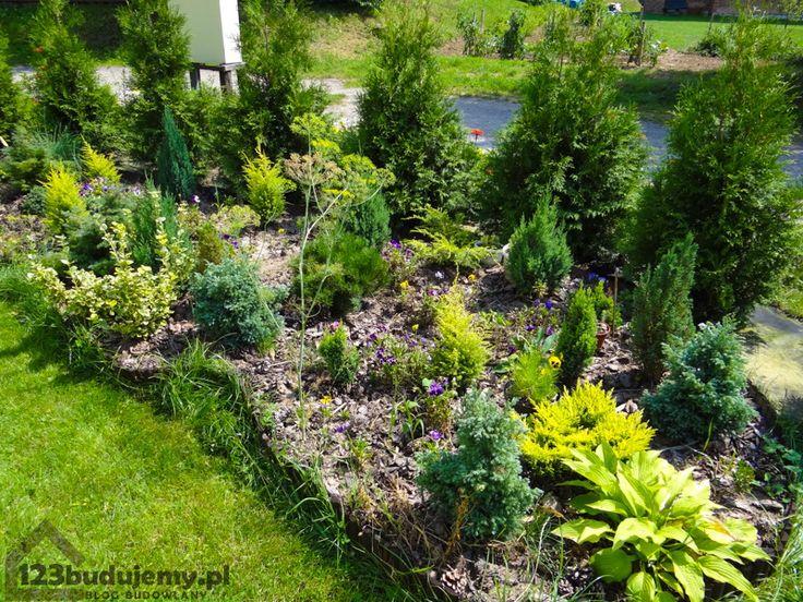 ozdobny skalniak, iglaki sadzenie iglaków w skalniaku - #Ogród, #Skalniak, #Rośliny, #Ogródek, #Thuje, #Iglaki, #Działka
