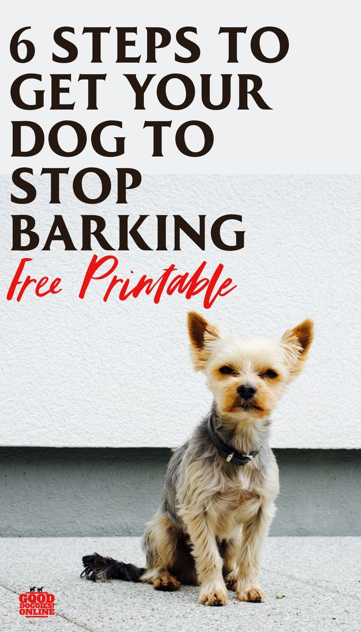 How To Stop Dog Barking With These Easy Dog Obedience Training