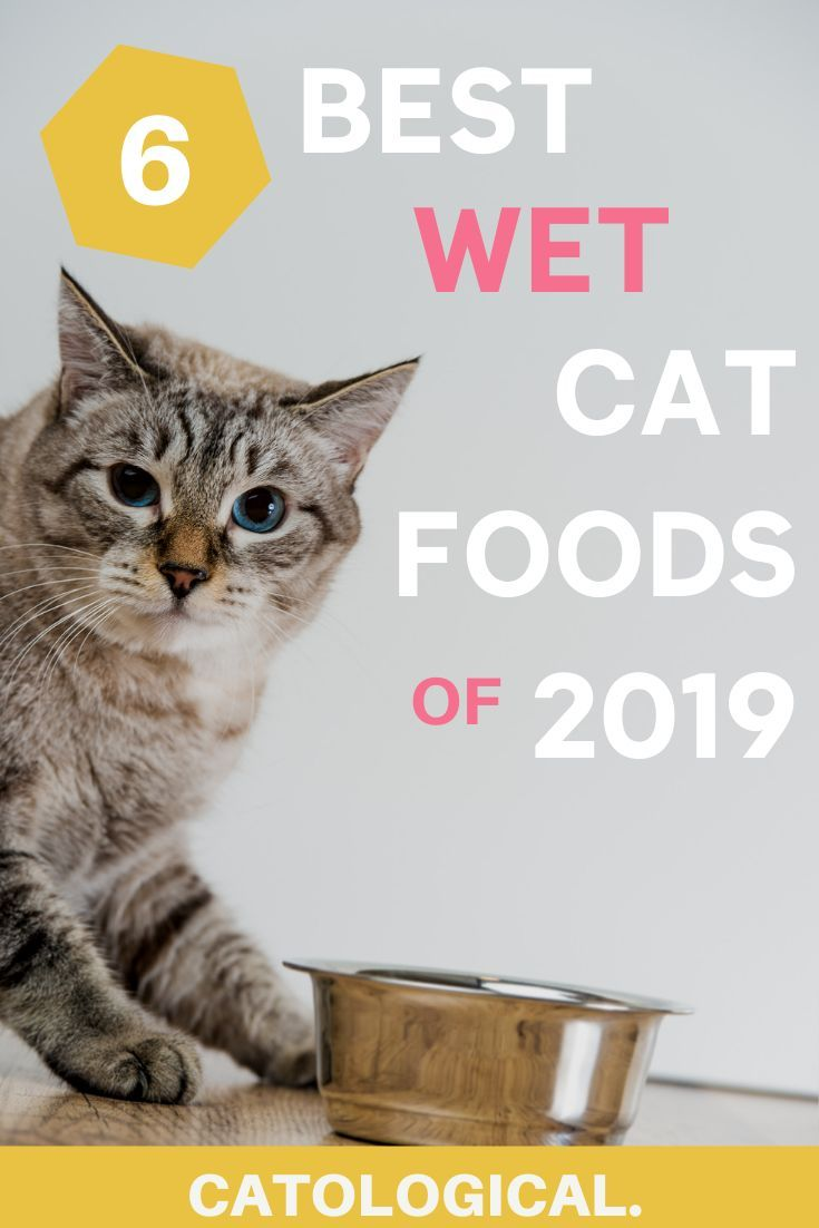 The 6 Best Wet Cat Food Brands With Ratings Reviews For 2019 In 2020 Cat Food Brands Healthy Cat Food Organic Cat Food