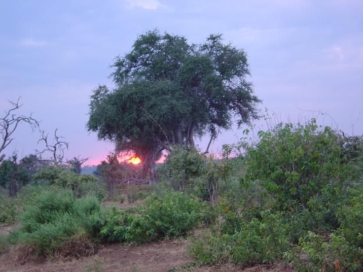 Botswana - Sunrise