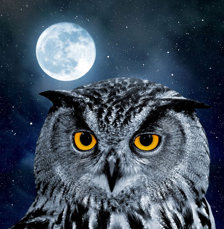 Free Owl Wallpapers: 50 Best Halloween Wallpapers Images On Pinterest