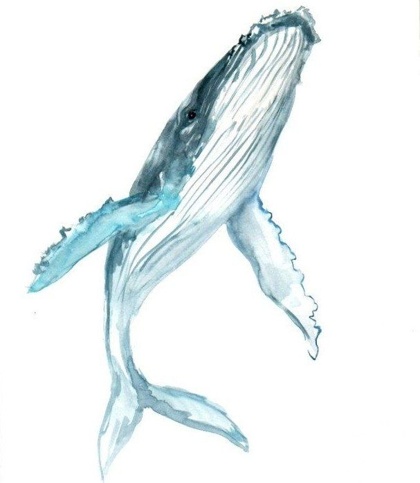 Blue whale tattoo design