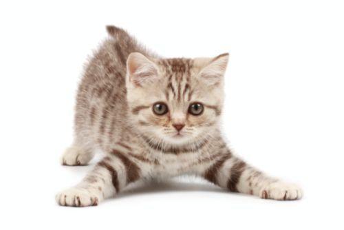 immagini di gatto - Cerca con Google