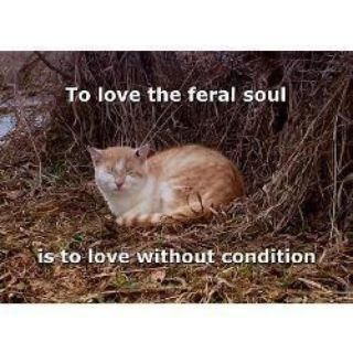 I love the feral cats I know... I name them and I have nearly touched them before.