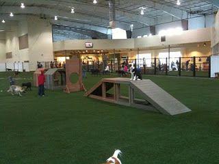 25 Best Ideas About Indoor Dog Park On Pinterest