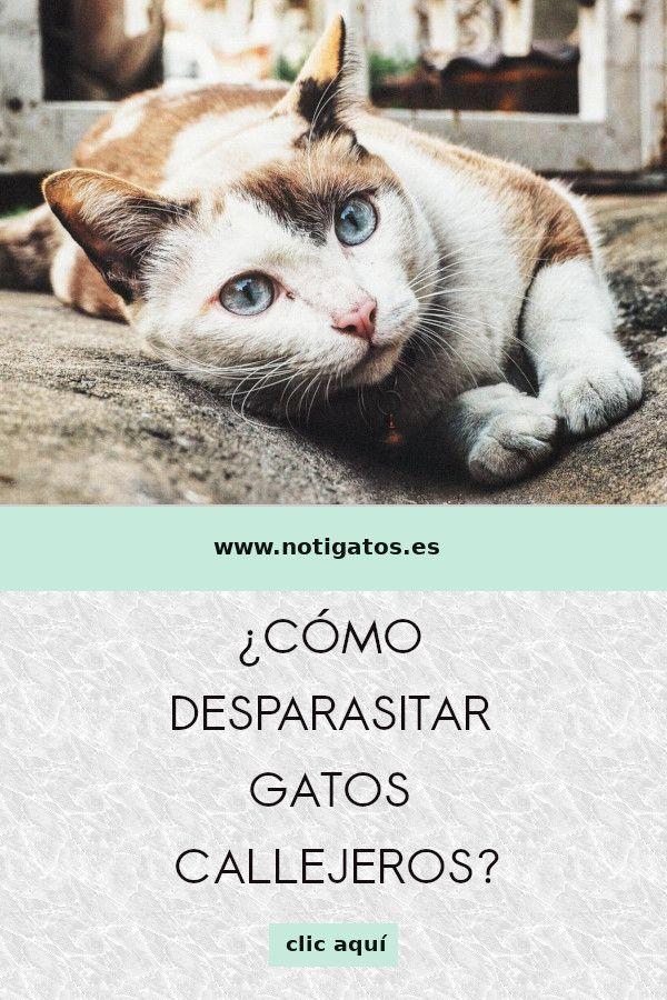 Cómo Desparasitar Gatos Callejeros Gatos Gatos Callejeros Felinos