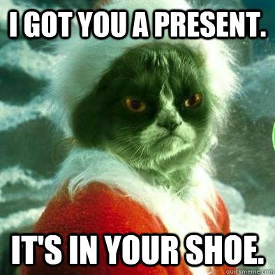 I Got You A Present It S In Your Shoe Cats Grumpy