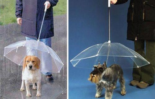 This creative pets umbrella will keep your dog nice and dry when you walk him on a rainy day. The concept is surprisingly simple. It looks like a regular umbrella, but the canopy is inverted so that when you point it downwards it's actually right-side up. The umbrella is transparent as well so as to not impede the dog's vision.