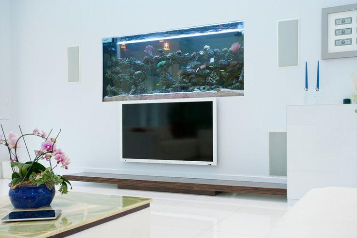 aquarium-maison-fixé-mur-dessus-écran-tv-plat aquarium maison