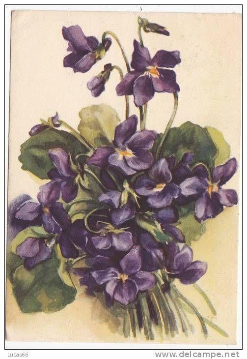 Cartolina Floreale Violette, 1942