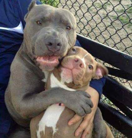 I ADOPTED me a little brother and he all mine! Watcha gonna do? ADOPT SHARE THE LOVE