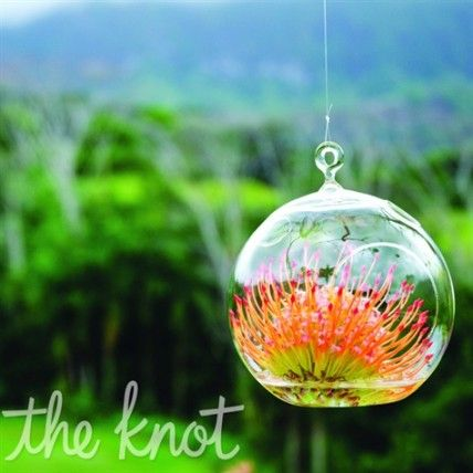 Australian Native Wedding Flowers Orange Protea Flowers in Glass Bulbs – The Knot
