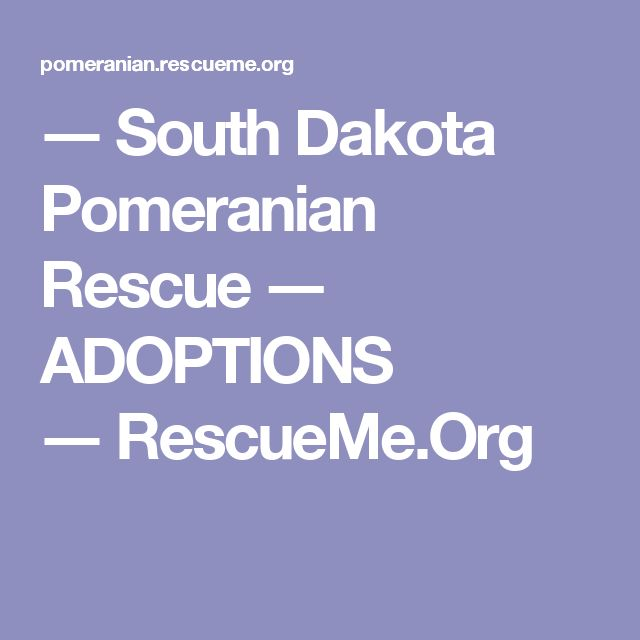 ― South Dakota Pomeranian Rescue ― ADOPTIONS ― RescueMe.Org