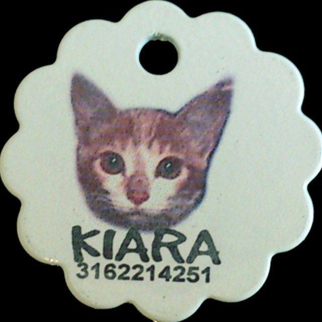 Placas Para Gatos con foto.  #PlacasParaMascotas #Foto #Mascotas #Bogota #Gatos #Identificacion #Gatos