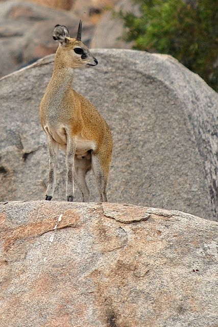 Tiny animal found in africa-4790