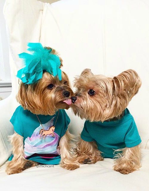 "These 10 Pictures of Pawty Time Pup Fashionistas are guaranteed to make you go ""Aww, that is so freaking cute""."