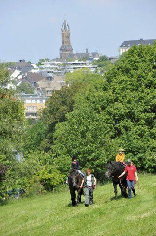Bergische Landpartie: Bauernhof mitten in die Stadt geholt | Bergisch Gladbach- Kölner Stadt-Anzeiger
